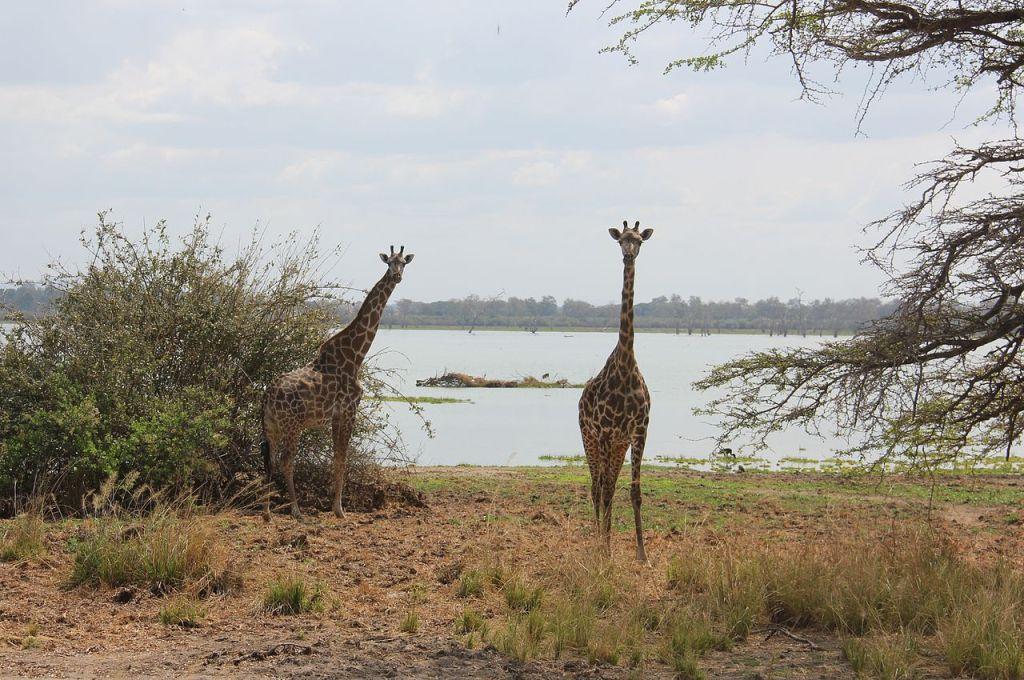 Selous Game Reserve, photo by Laika ac