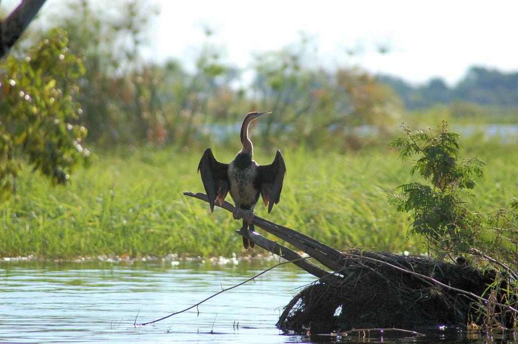 Chobe, photo by Joachim Huber